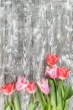 Fine Tulip Flowers Royalty Free Stock Image