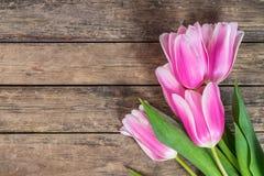 Fine Tulip Flowers Royalty Free Stock Photo