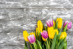 Fine Tulip Flowers Royalty Free Stock Photography