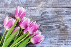 Fine Tulip Flowers Stock Photo