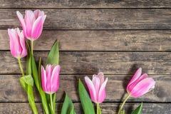 Fine Tulip Flowers Stock Image