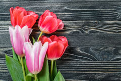 Fine Tulip Flowers Stock Images