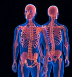 Fine umana dello scheletro su Vista anteriore e posteriore Contiene il percorso di ritaglio Fotografia Stock