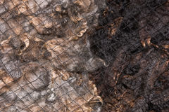 Fine unprocessed merino wool covered with protective net Stock Image