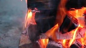 Fine vacillante su dei ceppi che bruciano su un fuoco di accampamento stock footage
