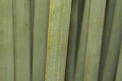 Fine verde del dettaglio della foglia dell'agave su Fotografia Stock Libera da Diritti