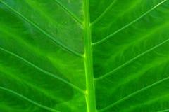 Fine verde del foglio in su Fotografia Stock Libera da Diritti