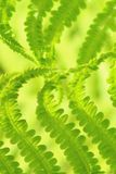 Fine verde del modello della foglia della felce sul formato di paesaggio fotografia stock