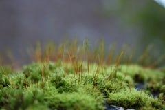 Fine verde del muschio su Fotografia Stock