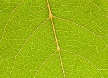 Fine verde della foglia su Immagini Stock