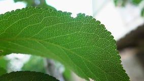 Fine verde della foglia su video d archivio
