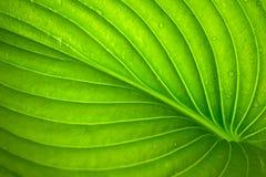 Fine verde della foglia su sfondo naturale immagini stock