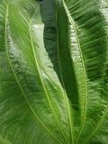 Fine verde di foilage della foglia su fotografia stock libera da diritti