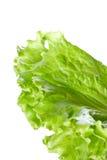 Fine verde raccolta fresca della lattuga su Fotografia Stock Libera da Diritti
