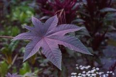 Fine viola della foglia su alla notte grande ora del blu delle foglie Fotografia Stock Libera da Diritti