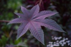 Fine viola della foglia su alla notte grande ora del blu delle foglie Immagine Stock