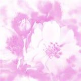 Fine watercolour. For background with sakura flower royalty free stock photo