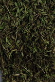 Finely chopped basil grass. Stock Photos