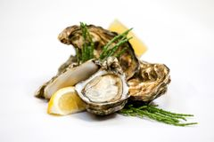 Fines de Claires Oysters with Lemon and Glasswort or Pickleweed. stock images