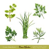Fines Herbes, Herb Blend. Fines Herbes, a traditional French herb blend for cooking: Sweet Marjoram, Chives, Chervil, Italian Flat Leaf Parsley, French Tarragon Stock Photo
