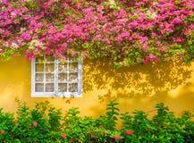 Finestra bianca in ombra dai fiori sporgentesi, casa di esterno di giallo