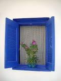 Finestra blu con i fiori rosa fotografia stock libera da diritti