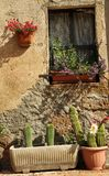 Finestra con i cactus, Toscana Fotografie Stock Libere da Diritti