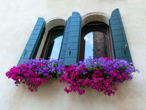 Finestra con i fiori sulla vecchia parete Fotografie Stock Libere da Diritti
