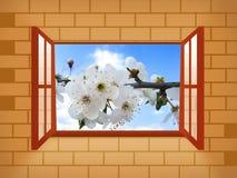 Finestra con il fiore della sorgente Fotografia Stock