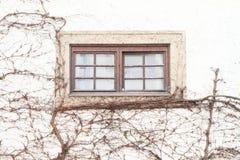Finestra con la buganvillea Fotografia Stock