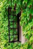 Finestra del cottage con l'edera Fotografia Stock Libera da Diritti