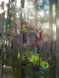 Finestra del fiore Immagini Stock