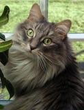 Finestra del gatto fotografie stock