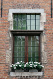 Finestra di legno con i vasi da fiori nella vecchia costruzione di mattone Fotografie Stock