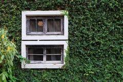 Finestra di legno sulla parete verde Fotografia Stock