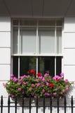 Finestra di telaio con la casella di finestra Immagine Stock