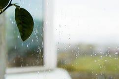 Finestra di vetro della pioggia e della foglia immagini stock libere da diritti