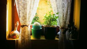 finestra e fiori fotografie stock libere da diritti
