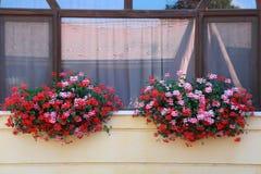 Finestra incorniciata con i fiori rossi freschi Immagine Stock Libera da Diritti