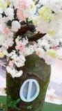 Finestra sull'albero fotografia stock libera da diritti