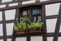 Finestra tipica con il fiore di vecchia casa a Strasburgo Immagini Stock