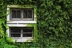 Finestra verde di Buiding immagine stock