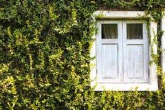Finestra verde di Buiding fotografia stock libera da diritti