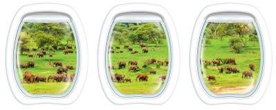 Finestre dell'oblò sugli elefanti Immagini Stock Libere da Diritti
