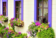 Finestre di legno con i fiori Fotografia Stock
