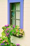 Finestre di legno con i fiori Immagine Stock