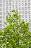 Finestre multiple su un grande edificio per uffici Londra Inghilterra Europ Fotografie Stock