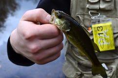 Fing einen Fisch ab stockfotos