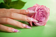 Finger with beautiful manicure touch a pink rose Stock Image
