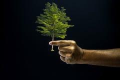 Finger del pellizco de la mano para dar un árbol Foto de archivo